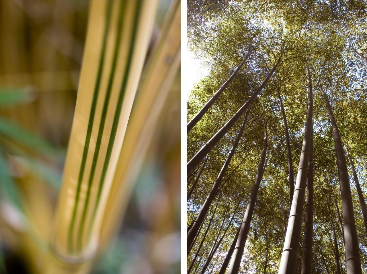 Vivaio Bamboo | Michele L Mulas