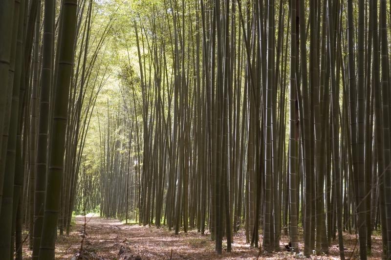 Set Da Giardino In Bamboo.Vivaio Bamboo Michele L Mulas